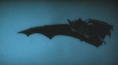 Nosferatu_the_vampyre_1979_3b